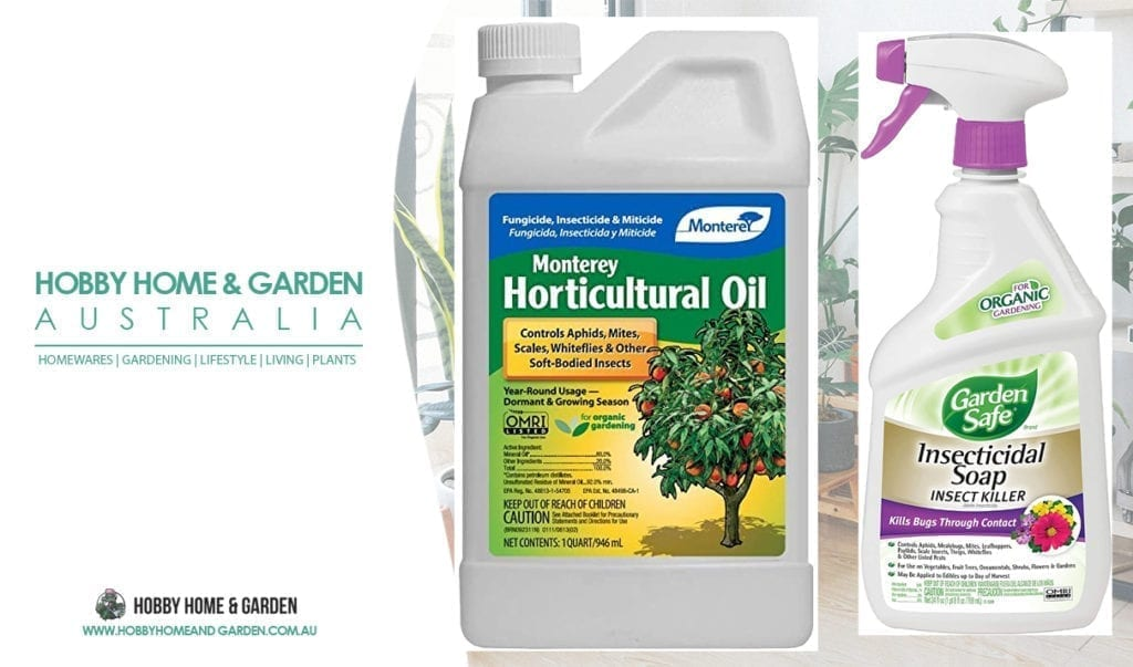 horticultural oil and insecticidal soap - abel prasad hobby home and garden