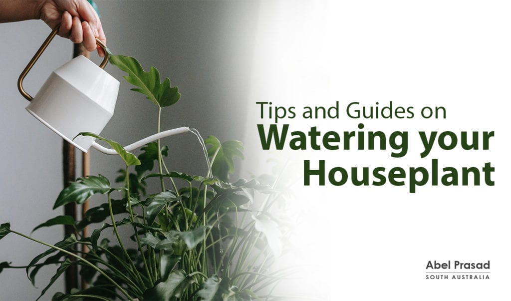 Tips and Guides on watering your houseplants - Abel Prasad